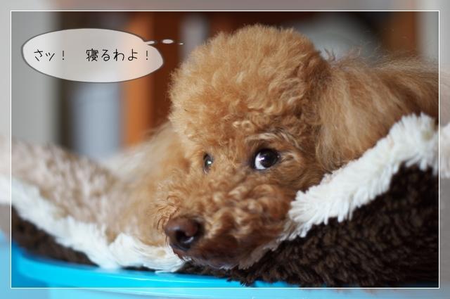 犬型目覚まし08