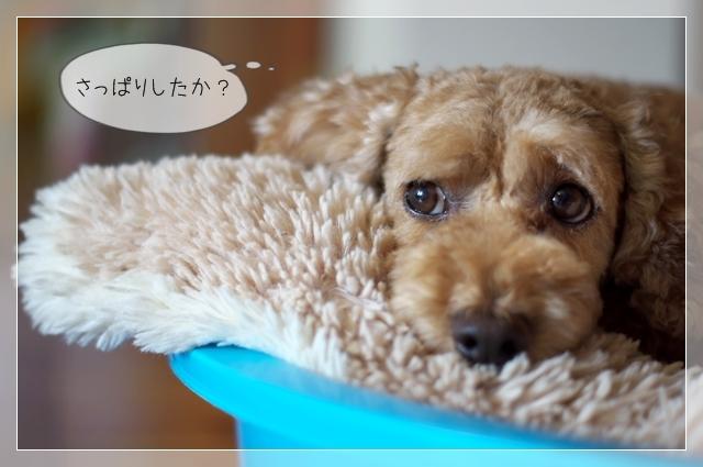 犬型目覚まし07