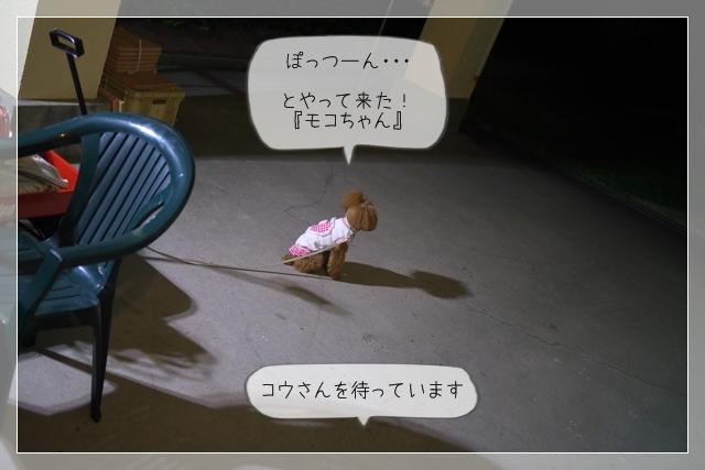 モコちゃん来る04