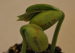 beans_0607.jpg