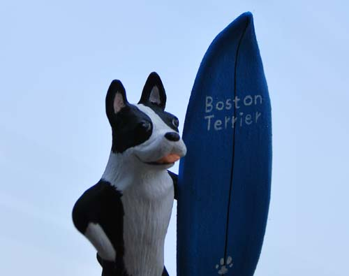 bostonterrier_0328.jpg