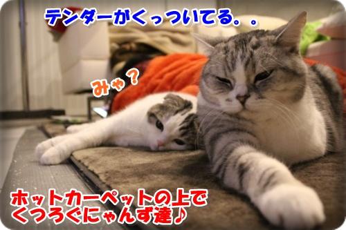 1-001_20130310000612.jpg