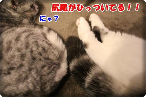 2-002_20130226233116.jpg