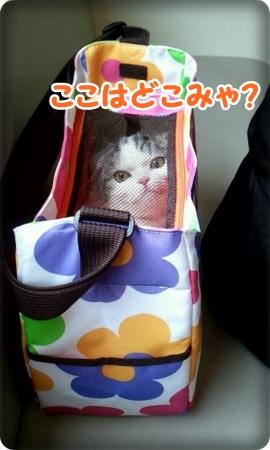 2013_03_16_10_31_24.jpg