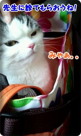 2013_03_16_10_37_28.jpg