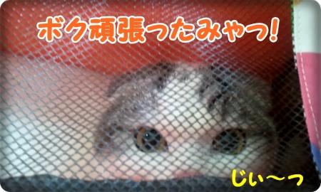 2013_03_16_11_02_39.jpg