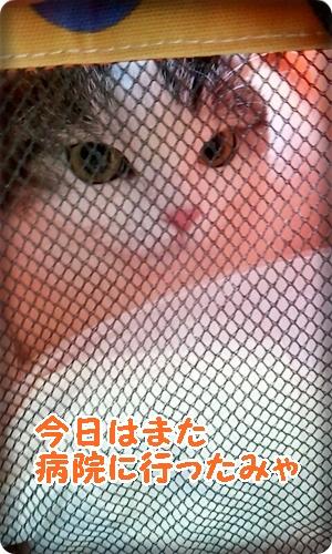 2013_03_23_14_03_53.jpg