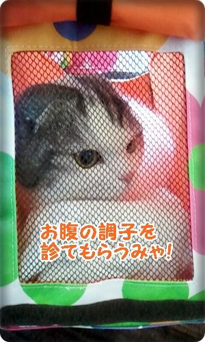 2013_03_23_14_04_28.jpg
