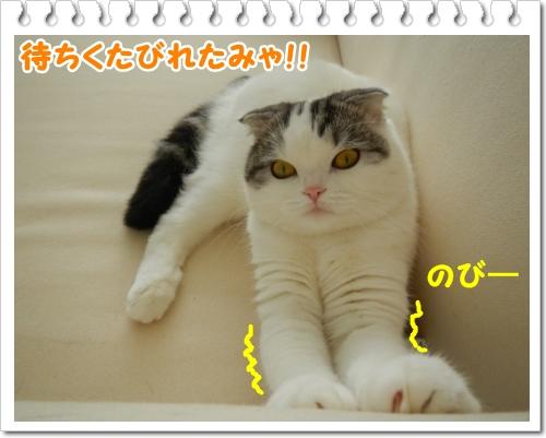 DSCN0243.jpg