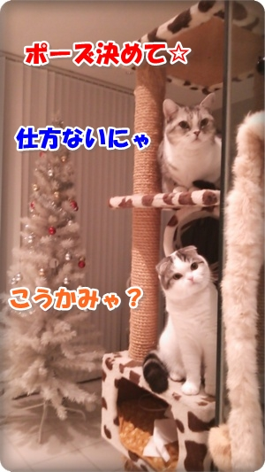 DSC_0032-001.jpg