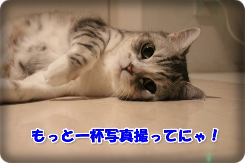 IMG_0223-006.jpg