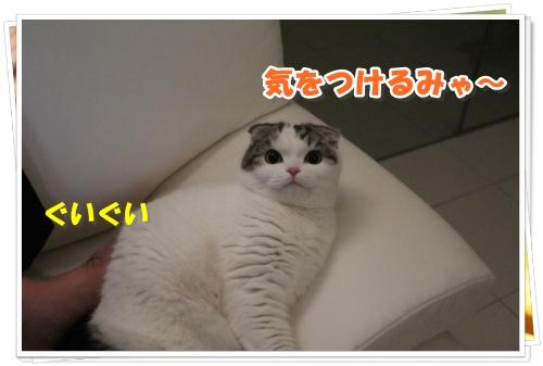 IMG_3104-006.jpg