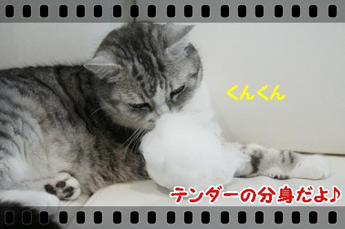 IMG_4427.jpg
