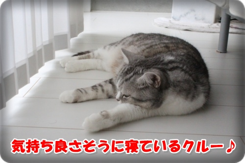 IMG_5015-024.jpg
