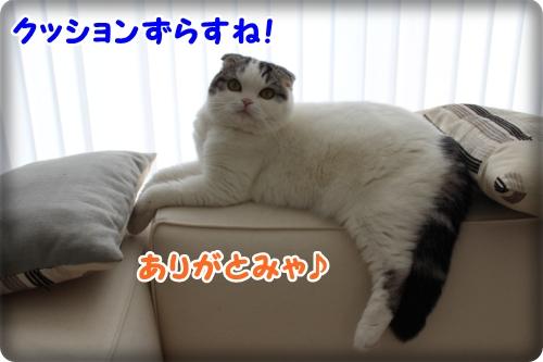IMG_5100.jpg