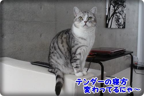 IMG_9248.jpg