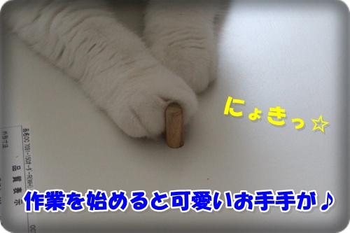 IMG_9412-006.jpg