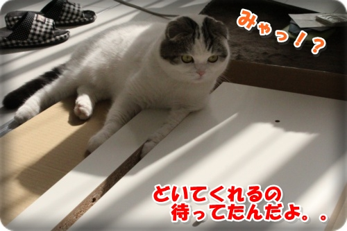 IMG_9491-002.jpg