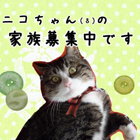 ニコちゃんブログ