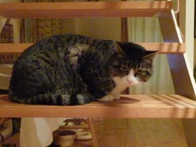 にこ階段20121229201445