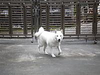 20120707yuzu