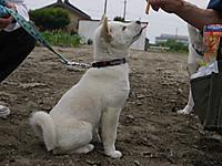 2011_0605029