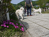 2011_0521018