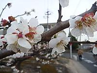 2011_0318007
