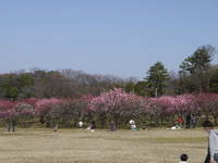 2011_0226014