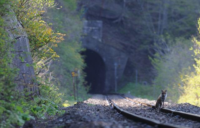 釜石線 D51498 佐生田トンネル先