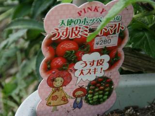 2012.05.05 ミニトマトの様子1.jpg