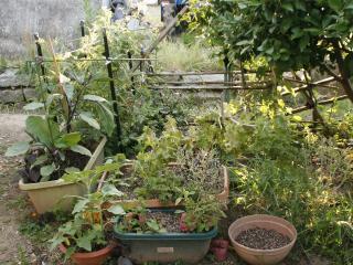 2012.06.14_ばあちゃんの菜園の様子1