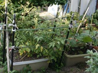 2012.06.14_ばあちゃんの菜園の様子2