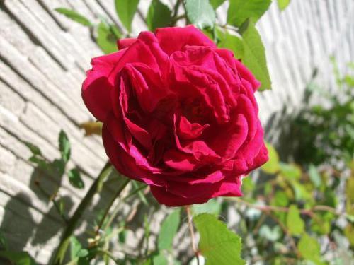 花盛りは・・6