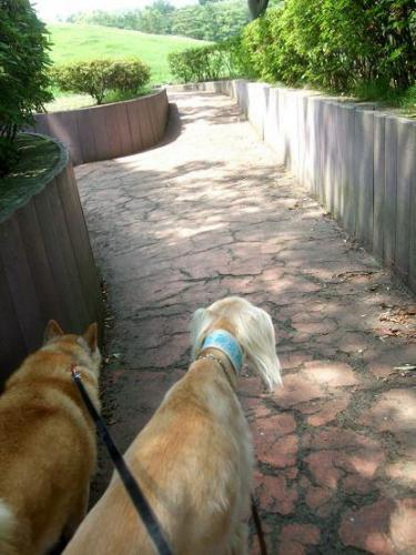 真夏の昼のお散歩は11