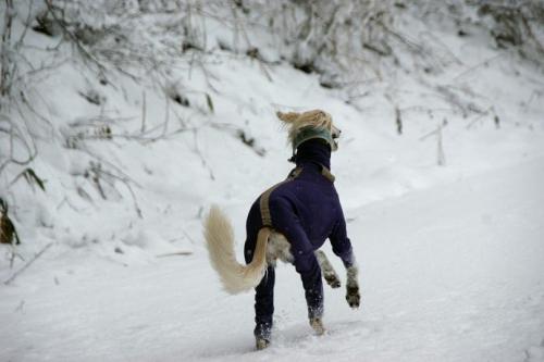 冬が始まる11