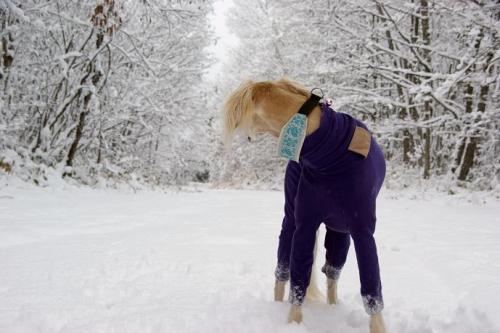 冬が始まる13