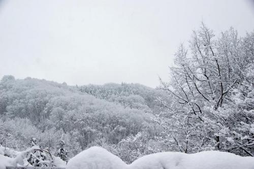 冬が始まる17
