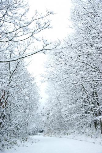 冬が始まる9