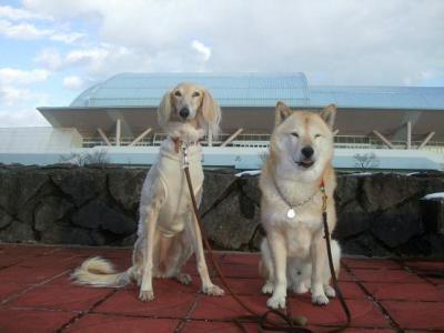 自由犬11