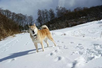 自由犬14