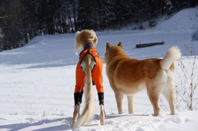 自由犬15
