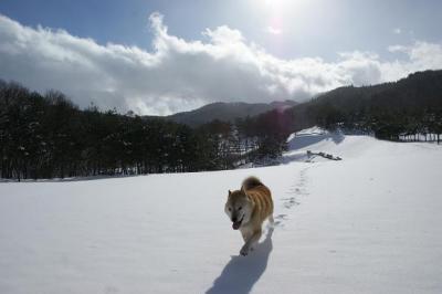 自由犬16