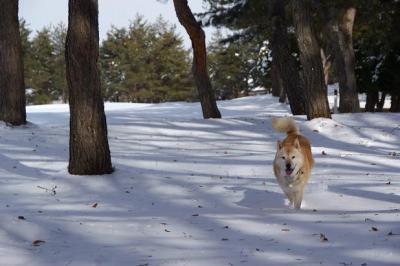 自由犬19