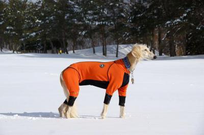 自由犬20