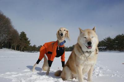 自由犬23