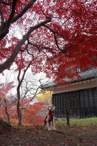 紅葉と温泉と4