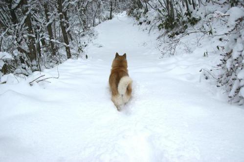 思いがけずの雪遊び10