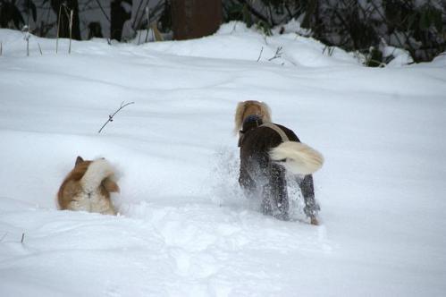 思いがけずの雪遊び11