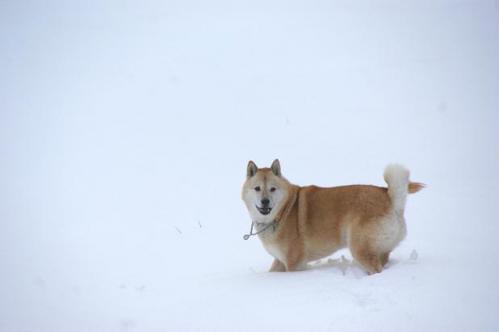 思いがけずの雪遊び12